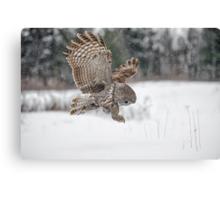 Homing in on prey... Canvas Print