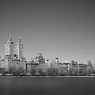Central Park, NYC by Fern Blacker