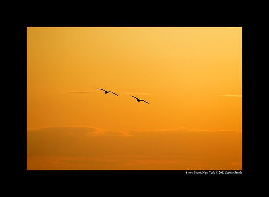 Two Seagulls Flying In The Golden Evening Sky - Stony Brook, New York  by © Sophie W. Smith