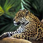 Jaguar by SandraWidner