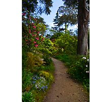 In the Rhododendron Garden Photographic Print