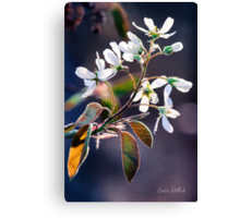 Glorious Shad Blossoms Canvas Print