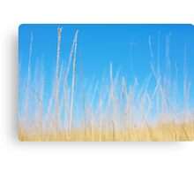 Golden Grasses on a Sunny Day Canvas Print