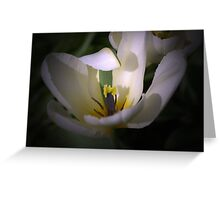 The White Tulip with the Green stripe Greeting Card