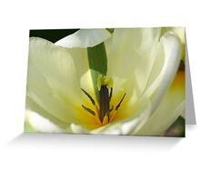 Lady in White; photograph of a tulip Greeting Card