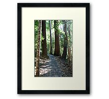 To walk among giants Framed Print