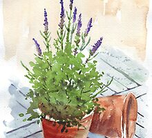 Flowers in Pots - Watercolours by Maree Clarkson by Maree  Clarkson