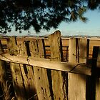 Joe Mortelliti Gallery - Old fence, Ascot Farm Lands by thisisaustralia