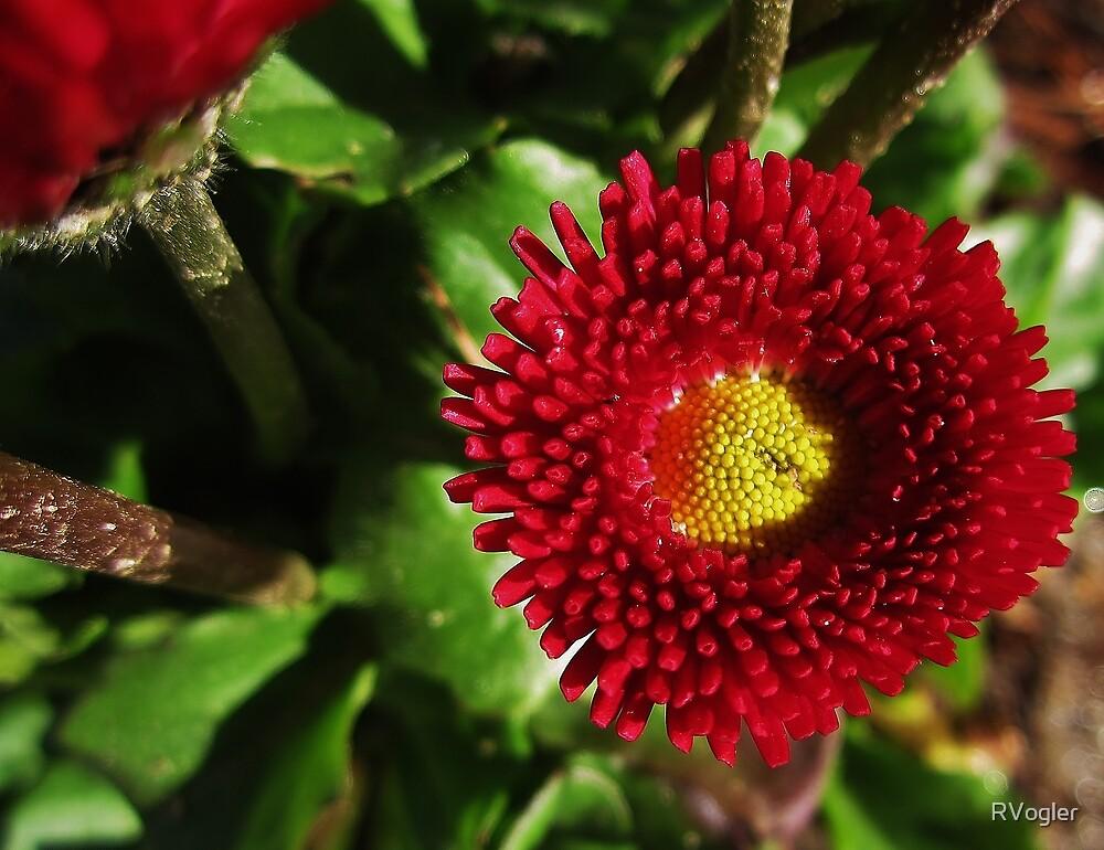 A Spot Of Red by RVogler