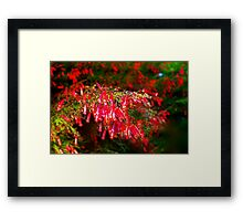 Watch out for the fireworks! Framed Print