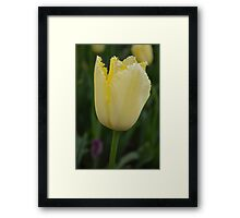"Yellow ""Sharp"" Tulip Framed Print"