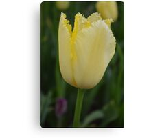 "Yellow ""Sharp"" Tulip Canvas Print"