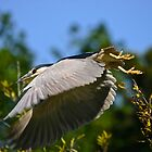 Heron Takeoff by Xcarguy