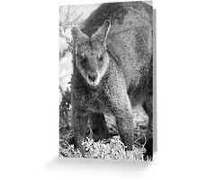 Wallaby. Greeting Card
