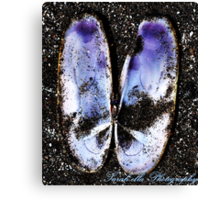 Bluebeach butterfly Canvas Print