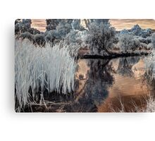Reeds in Westfield Heron Reserve Canvas Print