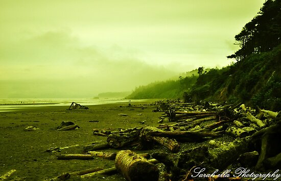 Green Beach Kalaloch by Sarah Ella Jonason