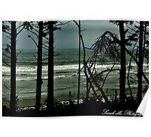 Ruby Beach through tall trees Poster
