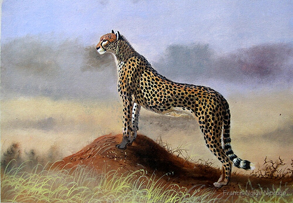 scouting cheetah by Mutan