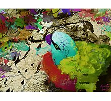 urban parrot Photographic Print