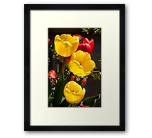 Yellow Tulips: Shining from The Shadows Framed Print