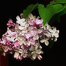 Lilacs Of Spring by Sharon Woerner