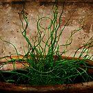 Pot of Green by Ginger  Barritt