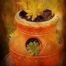 Terracotta Pot by Ginger  Barritt