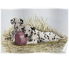 A Spot of Lunch (Dalmatian Puppies) Poster