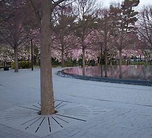 Cherry Blossom by marty1468