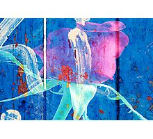 Rose Graffiti Photographic Print