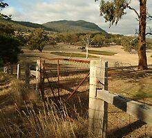 Joe Mortelliti Gallery - Mt Buangor State Park, western Victoria. by thisisaustralia