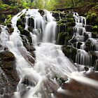 Olivia Creek Cascade  by Donovan wilson