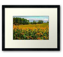 Berkshire Cornfield England Framed Print
