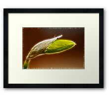 Abstract Daffodil Fractal Framed Print
