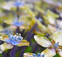 Autumn Hydrangea by Michelle Ricketts
