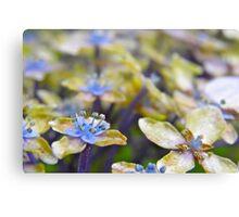 Autumn Hydrangea Canvas Print