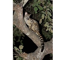 Genet joins us at a Barbeque Photographic Print