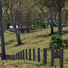 Fence Line by lib225