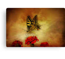 Open Your Wings And Fly Canvas Print