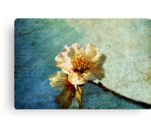 It Was Spring When You Wrote Me The First Letter Canvas Print