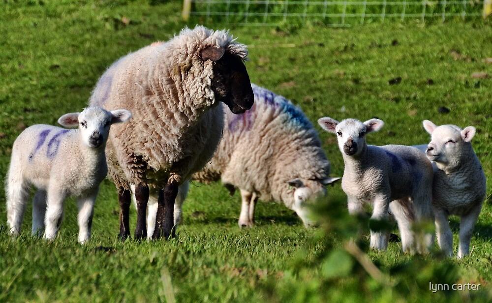 Sheep Family by lynn carter
