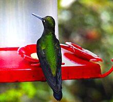 Ever Watchful Mindo Hummingbird by Al Bourassa