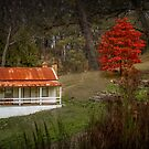 Autumn Cottage, Daylesford, Victoria by Julie Begg