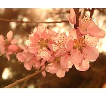 Blossoms with Sunshine Photographic Print