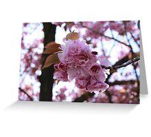 Japanese Flowering Cherry Greeting Card