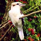 Kookaburra by Angelgold Art