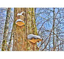 Snow catcher Photographic Print