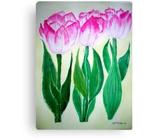 THREE PINK TULIPS Canvas Print