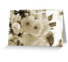 Monochrome Blossoms Close-up Greeting Card